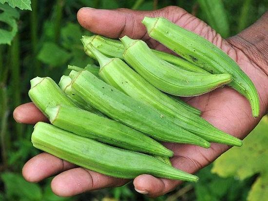 Đậu bắp có nguồn gốc từ Tây Phi