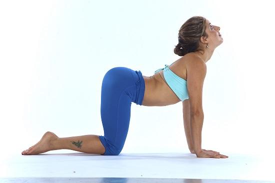 Tư thế con mèo trong yoga giúp giảm căng thằng và đau nhức cột sống