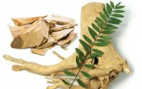 Giúp bạn biết cây mật nhân trị bệnh tiểu đường